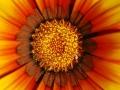 orto_botanico_cagliari-14