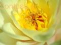 orto_botanico_cagliari-5