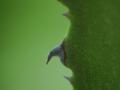 orto_botanico_cagliari-11