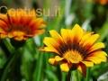 orto_botanico_cagliari-7