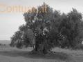 ortu_mannu_villamassargia-12