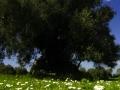 ortu_mannu_villamassargia-7