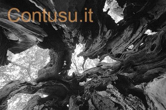 ortu_mannu_villamassargia17