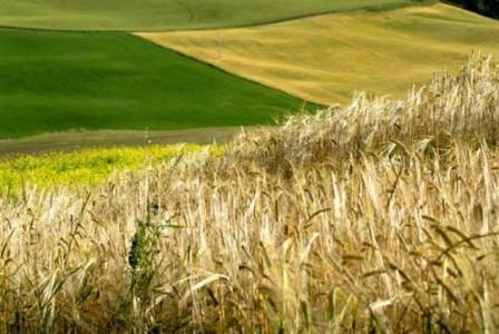 agricoltura in sardegna