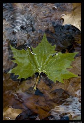 Foglie d'autunno - Sorgono