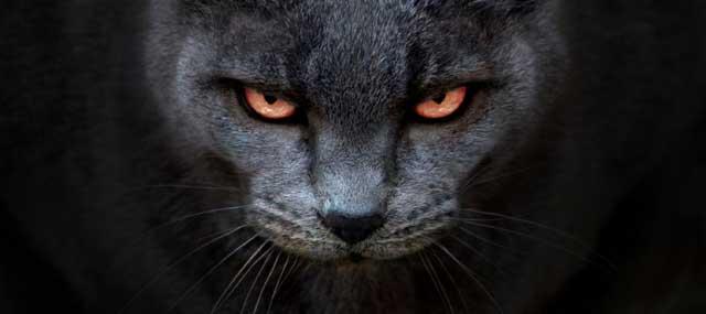 gatto_demone