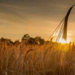 Le antiche formule sarde per proteggere i campi