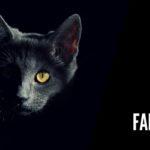 I gatti fantasma