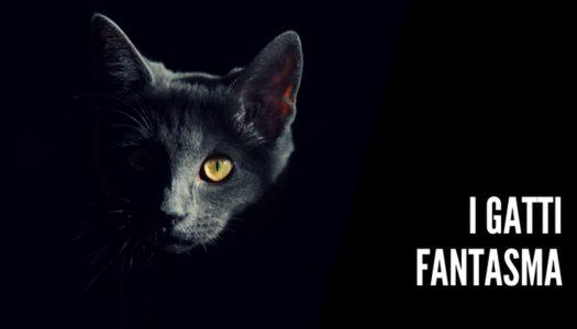 gatti fantasma