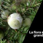 La flora sarda: una grande rarità di specie