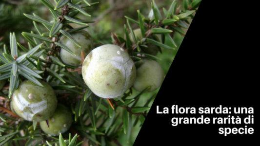 La flora sarda_ una grande rarità di specie