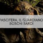 Su Pascifera, il guardiano dei boschi sardi